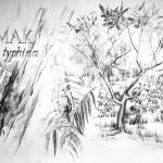 drzewa_praca wykonana podczas kursu rysunku